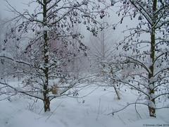A Winters Day.. (EmPhoto.) Tags: fujifilmfinepixs7000 winterlandscape pennines uk snowylandscape landscapepassion emmiejgee