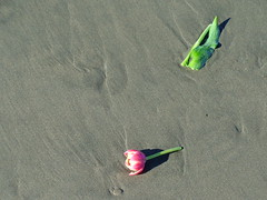 Ocean Beach (DorisFM) Tags: flores flowers playa beach invierno winter oceanbeach sanfrancisco california usa