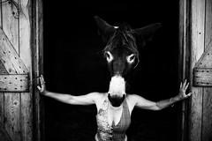 IMG_0270 (vitaminbea (Focus) - bea@vitaminbea.ca) Tags: donkey ne amiti portrait selfie vitaminbea lien animal tendresse