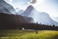 A single horse (Steffen Walther) Tags: fotografjena steffenwalther alpen alps austria hiking trekking wandern sterreich canon5dmarkiii canon1740l sunset tirol tyrol sterreich mountains road county ehrwalderalm vsco reisefotolust horse meadow polarizer hoya forest green outdoors