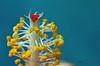 Hibiscus Anatomy (ArvinderSP) Tags: india flower macro closeup photography flora style hibiscus anatomy stigma filament newdelhi 604 anther macrophotography arvindersingh nikon28105f3545d nikond7000 arvindersp arvinderspcom