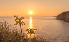 Southerndown Sunset, Nikon D610 (technodean2000) Tags: uk sunset sea birds wales lady landscape nikon south bugs ladybird lightroom southerndown d610 1835mm