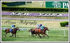 Lady Eli wins the Wonder Again. (EASY GOER) Tags: horses horse ny newyork sports race canon track running racing 5d athletes athlete races 56 thoroughbred equine lense belmontpark 400mm markiii