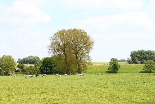 Steenkerque (Braine-le-Comte, Belgique)