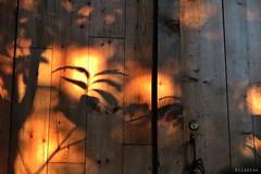 A garden's hut (nathaliedunaigre) Tags: sunset coucherdesoleil ombres shadows light lumire garden jardin cabane hut bois porte door wood