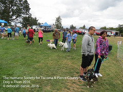 DAT2016_Crowd (greytoes_99) Tags: agility dat2015 dat2016 event humanesocietytacoma people summer tacoma tacomahs volunteers dog humananimalbond cat lakewood wa us