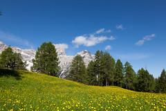 Fiori sotto la Croda Rossa (Guido Barberis) Tags: sesto moso sexten croda rossa prato field flowers fiori dolomiti mountain berg