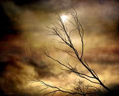 Adu lluna de nit, adu sol de migdia (Aviones Plateados) Tags: canon eos550d rebel t2i kissx4 backlight contraluz textures arbol arbre tree contrallum alenar mariadelmarbonet 1977 lenabemannaj