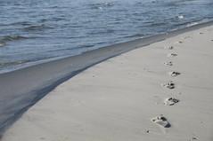 Spurensuche ( eulenbilder - berti ) Tags: strand wasser wind urlaub wolken dnemark nordsee ostsee dnen