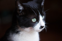 Temari 2 (lakeside_cat) Tags: cat temari pet animal nikond3s nikon d3s    catportrate portrate