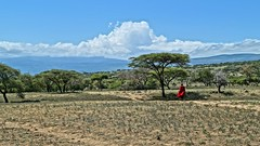Massai (tor-falke) Tags: africa afrika africalandscape afrique african africanpeople africanlandscape landschaft paysage hdr tree trees clouds wolken himmel blauerhimmel bluesky baum bäume tansania ngorongoro massai tribes tribo tribu nationalpark naturvölker natur nature massaitribe ngc