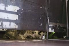 DSC05624 (C*A(t)) Tags: cat straycat taiwan taipei taipets sony a7s