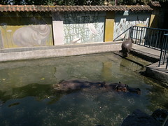 20160805_123128 (vale 83) Tags: hypos belgrade zoo serbia nokia n8 worldofanimals