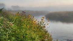 P8020016-54 pano2 -HDR-ICEv2-G-left (virgil martin) Tags: dawn goldenhour landscape river mist morningmist wildflowers grandriver inverhaugh wellingtoncounty ontario canada olympusomdem5 panasoniclumix20mmf17 oloneo microsoftice gimp