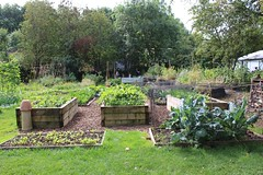 Vegetable garden in Bristol (Local Food Initiative) Tags: windmill hill city farm bristol raised bed beds growing vegetable garden gardening gardens permaculture organic sustainable small scale food production