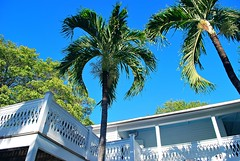 Key West (Florida) Trip 2015 0505Rif 4x6 (edgarandron - Busy!) Tags: florida keys floridakeys keywest blueparrotinn building buildings