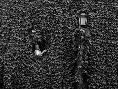 Roma - 2016 (Enzo D.) Tags: biancoenero blackandwhite streetlamp climbing italia italy olympus plant roma rome facade gardener trastevere lazio it
