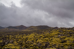 Berserkjahraun 52 (raelala) Tags: 2016 berserkjahraun snaefellsnes snaefellsnespeninsula canon1785mm crater europe europeantravel iceland icelanding2016 lava lavafield photographybyrachelgreene ringroad roadtrip scandinavia thatlalagirl thatlalagirlphotography thatlalagirlcom travel