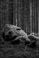 Forest (imagomagia) Tags: art artphoto artphotography blackandwhite blackandwhitephotography fineartphotography forest fujix fujifilm naturallight nature noiretblacphotographie noiretblanc noiretblancphotographie tree trees