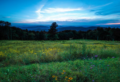 The end of the day (Ed Rosack) Tags: grass usa landscape sunset flower edrosack hills dusk tree panorama forest em5markiihighres shenandoahnationalpark sky virginia valley cloud meadow mountain cloudy explore