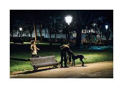 Jardim da Estrela, Lisboa (Sr. Cordeiro) Tags: park street dogs portugal night 35mm fuji walk lisboa lisbon f14 estrela jardim noite ces fujifilm rua fujinon passeio xf jardimdaestrela xpro1