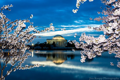 Jefferson Memorial and Cherry Blossoms at Sunrise 2 (law_kid) Tags: washingtondc dc washington capital cherryblossom cherryblossoms tidalbasin cherryblossomfestival nationalmallandmemorialparks