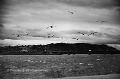 stormy atmosphere (Warren Qc) Tags: autumn lake fish canada storm bird fall saint america automne river vent spring jean wind quebec riviere lac wave poisson printemps oiseau saguenay orage mouette chicoutimi tempete amerique