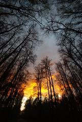 1-IMGP8685 (PahaKoz) Tags: sunset tree nature clouds spring glow branches linden parkland закат lindentree природа весна парк облака деревья липа ветви зарево липы