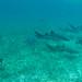 Um grupo grande de tubarões