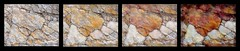 Progression (edenseekr) Tags: collage painted rocks