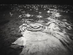 Rainy day (TheLionPo) Tags: blackandwhite monochromatic byn bw water ripple ondas lluvia rain rainyday sad mobile xperia
