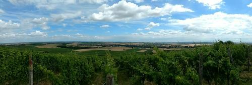 Panorama Rheinhessen