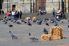 Tesoro No 5. Un pjaro cuidando el maz (Angela MGM) Tags: gente maz bogot plaza palomas juegolvm