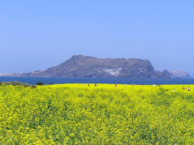 済州島の体験:専用車で行く!済州世界遺産 絶景1周
