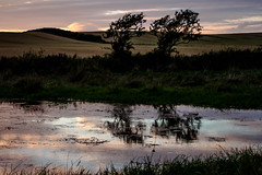 Sunset_by_the_waterworks_3860-3 (allybeag) Tags: sunset reflection waterworks pond puddle crosscanonby
