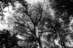 Shinjuku Gyoen, Tokyo (fabiolug) Tags: trees tree trunk branches nature shinjukugyoen park shinjuku tokyo japan japanese asia leicammonochrom mmonochrom monochrom leicamonochrom leica leicam rangefinder blackandwhite blackwhite bw monochrome biancoenero 35mmsummicronasph 35mmf2summicronasph summicronm35mmf2asph summicron35mmf2asph 35mm summicron leicasummicron leica35mm