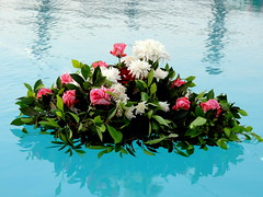 Passing Flowers (Khaled M. K. HEGAZY) Tags: nikon coolpix p520 orabi egypt nature outdoor closeup rose plant flower petal leaf leaves foliage red green blue white pink water swimmingpool