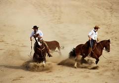 #freiodeouro #ABCCC #CavaloCrioulo (fernandaalinel) Tags: freiodeouro abccc cavalocrioulo
