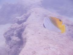 Haunauma Bay (jjandames) Tags: haunaumabay snorkeling 2016 hawaii oahu hanaumabay