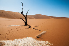 namibia2015-116 (yriis) Tags: namib desert sand immensity uninhabited wildness dune travel 45 red sky blue africa namibia kalahari