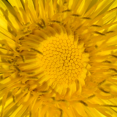 DSC_4333 (AnTalk) Tags: flowers macro garden spring d750 garten tavasz kert nikkor105mmf28gvrmicro