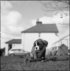 Little Tom at his new home by steve-jack - makes a nice cropped photo  Hasselblad 501cm 80mm cb Ilford pan f +50