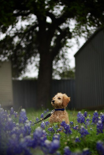 "Easter 2015 Bluebonnet Adventure • <a style=""font-size:0.8em;"" href=""http://www.flickr.com/photos/20810644@N05/17050199291/"" target=""_blank"">View on Flickr</a>"