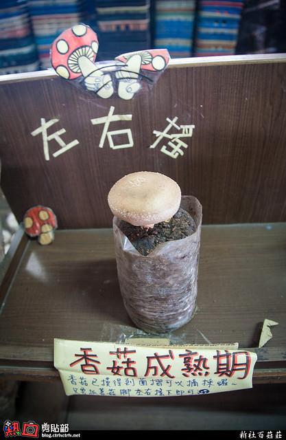 [遊記] 新社百菇莊
