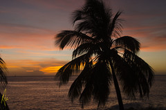 Dominica sunset (Izzysan) Tags: sunset sea sunlight nikon seascapes coconut ngc palm caribbean dominica nikondslr lightstalking seascapeandshoreline dominicaimage dominicaphotography