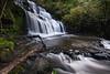 "Purakanui Falls, Catlins Forest Reserve (Nur Ismail Photography) Tags: longexposure newzealand fall tourism trekking river scenery adventure southisland catlins touristattraction purakanui ""new island"" zealand"" ""photo ""south purakanuifalls nurismailphotography nurismailmohammed nurismail"