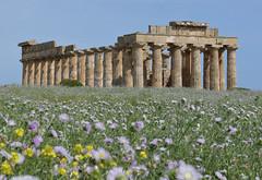 Selinunte : le Temple E (CpaKmoi) Tags: italia italie selinunte hera sicile sicila templee coth ruby5