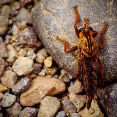 Insect Unknown (Cmuozfernandez) Tags: insecto raro rare insect piedras stone rocas rock roca rocks piedra bicho desconocido unknow