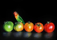 Jamie&theTomatoes (Pringle Poirot) Tags: stilllife bird tomato bright fineart lovebird luminance carandache fabercastell fischerslovebird pittpastel fabrianotiziano