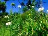 Gyllyngdune garden (Judith North) Tags: